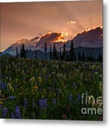 Sunbeam Garden Metal Print