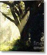 Sunbeam Tree Metal Print