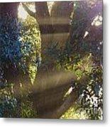 Sunbeams In The Tree Metal Print