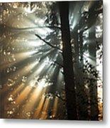 Sunbeams Through Trees Metal Print