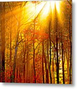 Sunburst In The Forest Metal Print