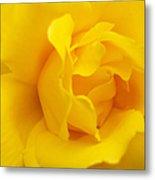Sunburst Rose Flower Metal Print