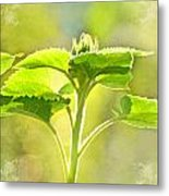 Sundrenched Sunflower - Digital Paint Metal Print