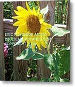 Sunflower 3 Metal Print