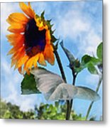 Sunflower Against The Sky Metal Print
