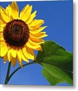 Sunflower Alone Metal Print