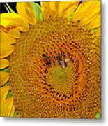 Sunflower And Bees Metal Print