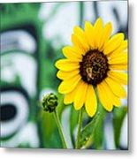 Sunflower And Graffiti  Metal Print