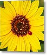 Sunflower And Ladybird Beetle 2am-110490 Metal Print