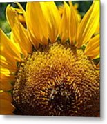 Sunflower And Two Bees Metal Print