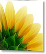 Sunflower Backside Metal Print