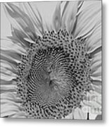 Sunflower Black And White Metal Print