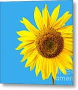 Sunflower Blue Sky Metal Print