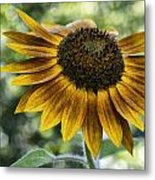 Sunflower Bokeh Metal Print