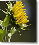 Sunflower Bright Side Metal Print