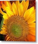 Sunflower Bright Metal Print