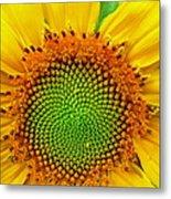 Sunflower Center Metal Print