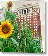 Sunflower City Metal Print