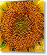 Sunflower Close-up Metal Print