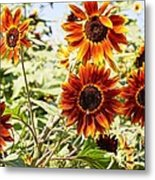 Sunflower Cluster Metal Print