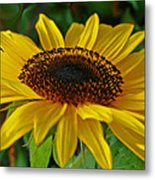 Sunflower Metal Print by Daniele Smith