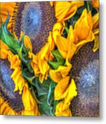 Sunflower Delight Metal Print