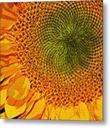 Sunflower Digital Painting Metal Print