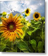 Sunflower Dream Metal Print