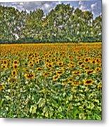 Sunflower Fields Ford World Headquarters Dearborn Mi Metal Print