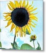 Sunflower Fields Forever One Metal Print