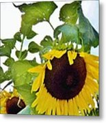 Sunflower Fields Forever Two Metal Print