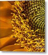 Sunflower Grace Metal Print