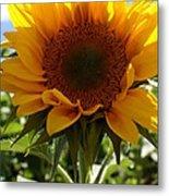 Sunflower Highlight Metal Print