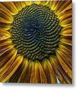 Sunflower In Rain Metal Print
