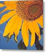 Sunflower In The Corner Metal Print