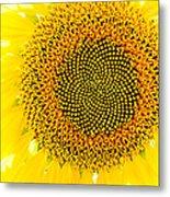 Sunflower In The Summer Sun Metal Print