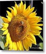 Sunflower-jp2437 Metal Print