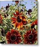 Sunflower Layers Metal Print