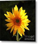Sunflower Love Metal Print