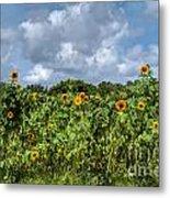 Sunflower Maze Metal Print