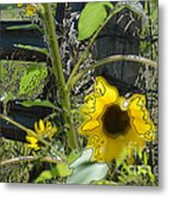Sunflower Outline 4 Metal Print