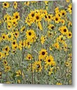 Sunflower Patch On The Hill Metal Print