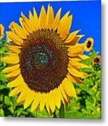 Sunflower Power Metal Print