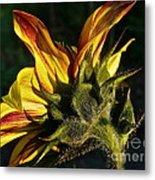 Sunflower Profile Metal Print