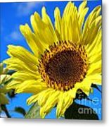 Sunflower Reaching For The Sun Metal Print