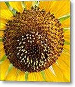Sunflower Reproductive Center Metal Print