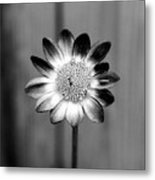 Sunflower Single Metal Print