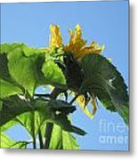 Sunflower Sky Metal Print