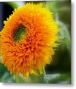 Sunflower Soft Metal Print
