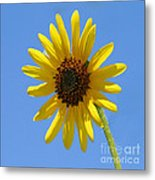 Sunflower Square Metal Print